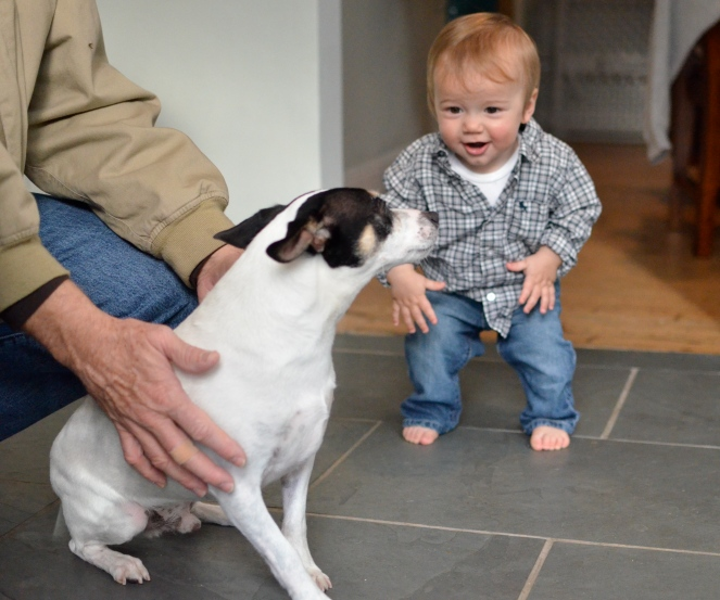 Baby and Dog Reunion