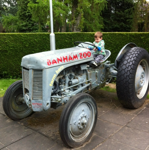 Banham Zoo tractor