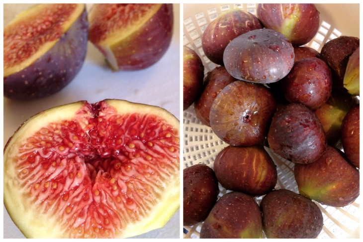 So Many Figs